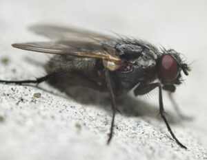 exterminators -